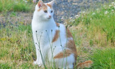 Larry the SportsCat Picks for Emerald Downs